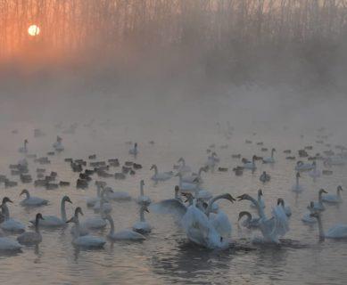 Фотопрогулки с Александром Тырышкиным_Лебединое озеро_2