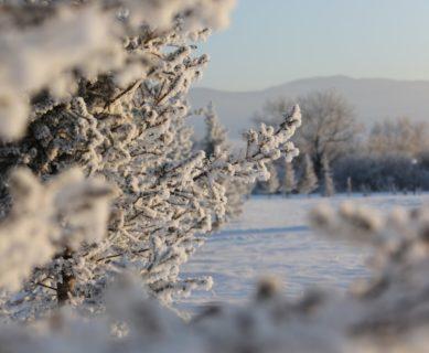 Новый год на Алтае_в парк-отеле Алтай Green_12